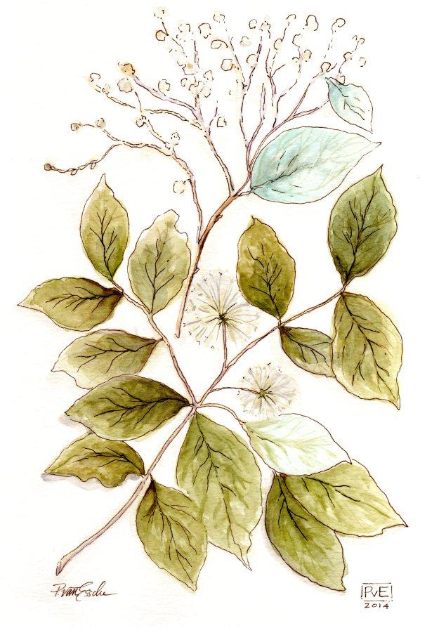PvE Design -botanical516