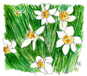 PvE-Daffodils2015622