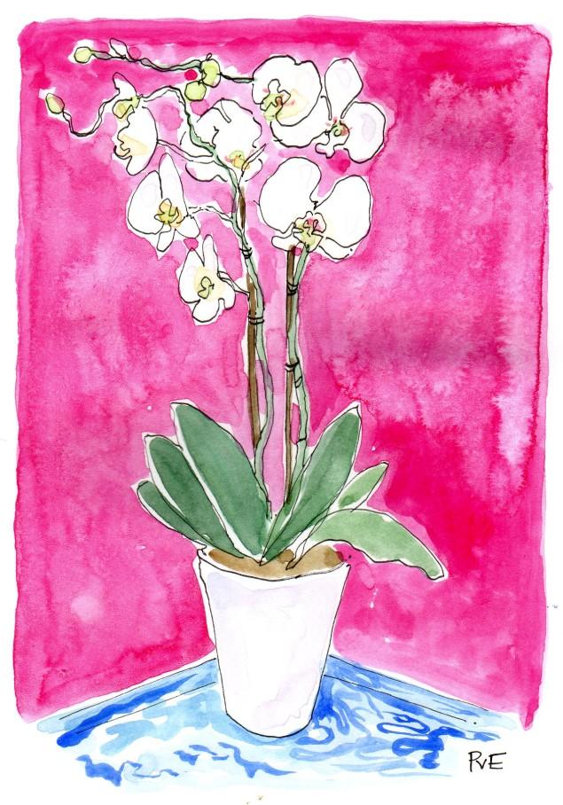 PvE Design - Orchid show931
